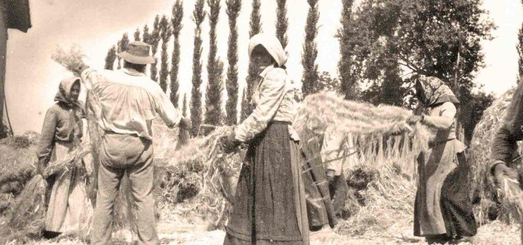 La storia della canapa - Calcecanapa
